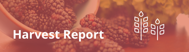 online lead generation harvest report september 2015