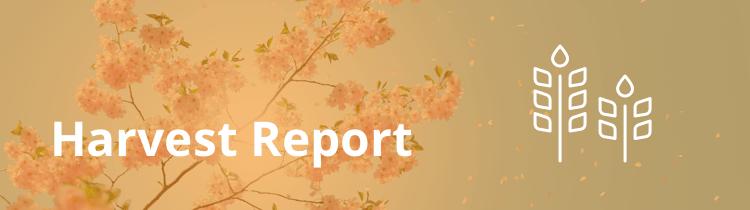 investor carrot lead generation report