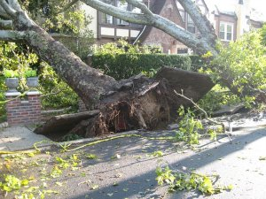 Storm damage while you have a house on the market - Long Island NY
