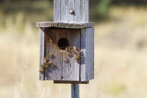 bee problem - seasonal home maintenance checklist for remote homes on long island