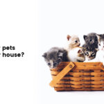 pets in a house