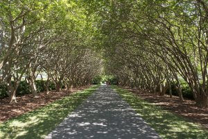 Charlotte Canopy of Trees