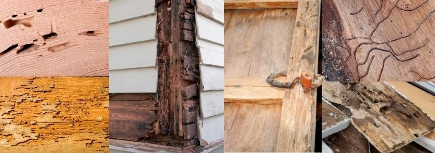 examples of small to extreme termite damage in Utah on a house-home