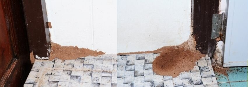 termite damage on a house