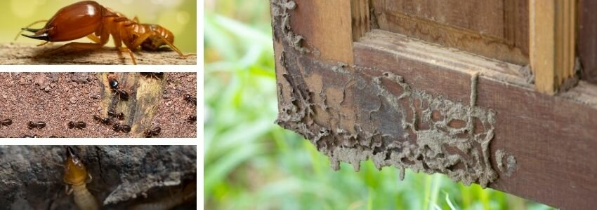 what does termite damage look like
