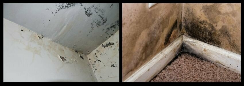 selling a house with black mold in Utah