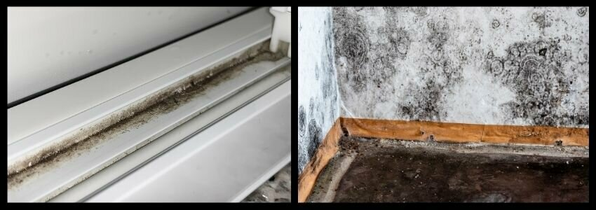 what does black mold look like selling a house