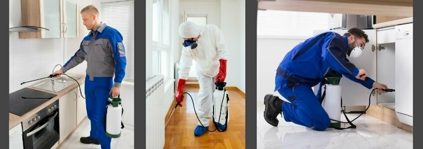 Getting Rid of Cockroaches in Your House by man spraying liquid around