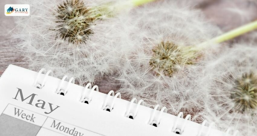 calendar showing the month of May with seeding dandelions behind it