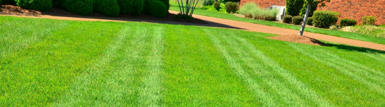 Lawn Care Mistakes That Can Ruin Your Yard In Grandview
