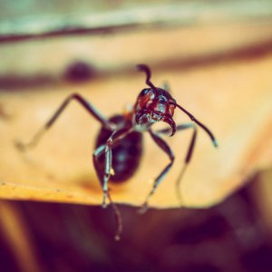 Remove Pests From Your Florida Home Ants
