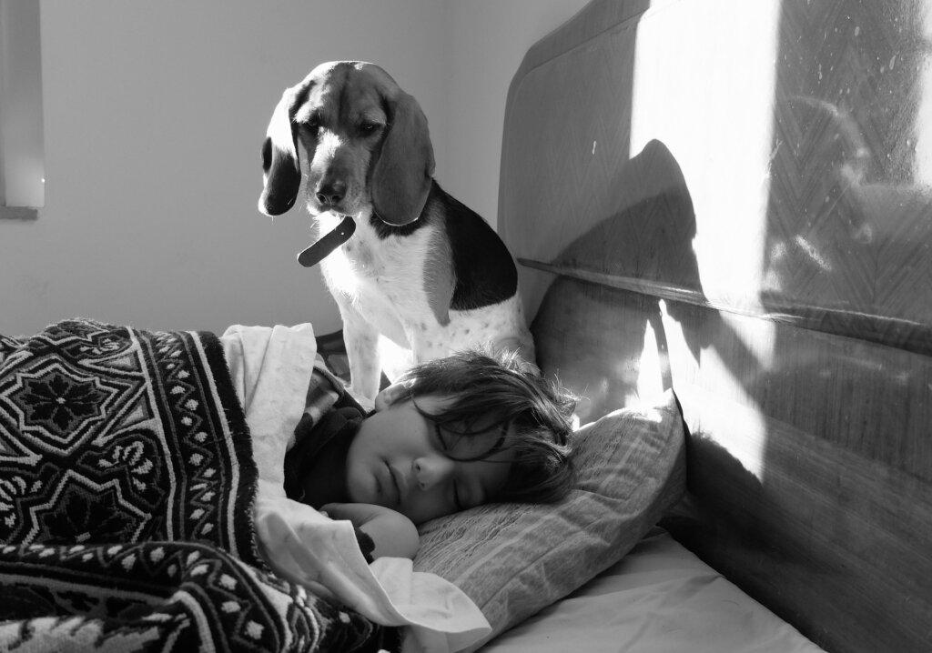 dog watching sleeping kid