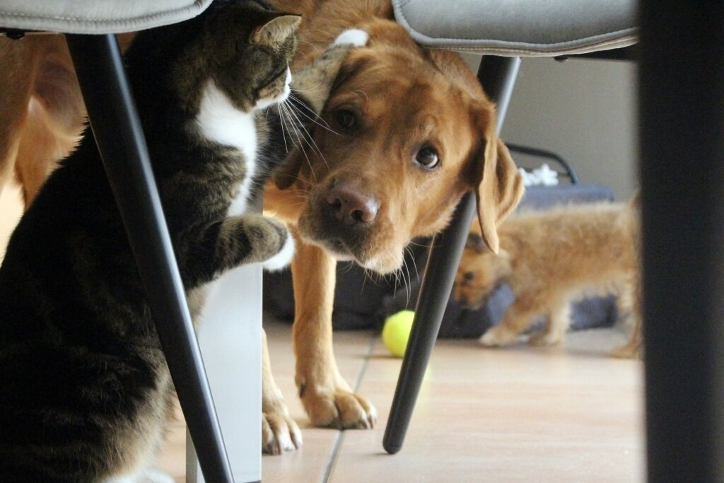 cats teasing dog