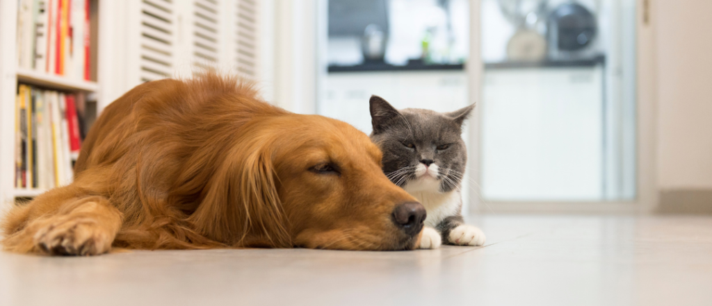 Dog and Cat on floor crop