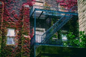 An overgrown wall in New Brunswick, NJ. With Templar Real Estate Enterprises, you can sell your house without having to fix yard problems.