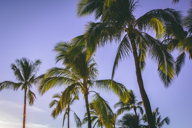palm trees in Hawaii - where we buy houses