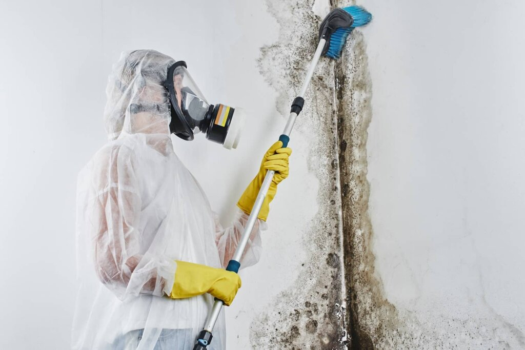 mold-remediation-in-a-house