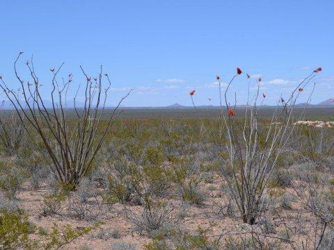 40 Acres for Sale Douglas AZ flowers