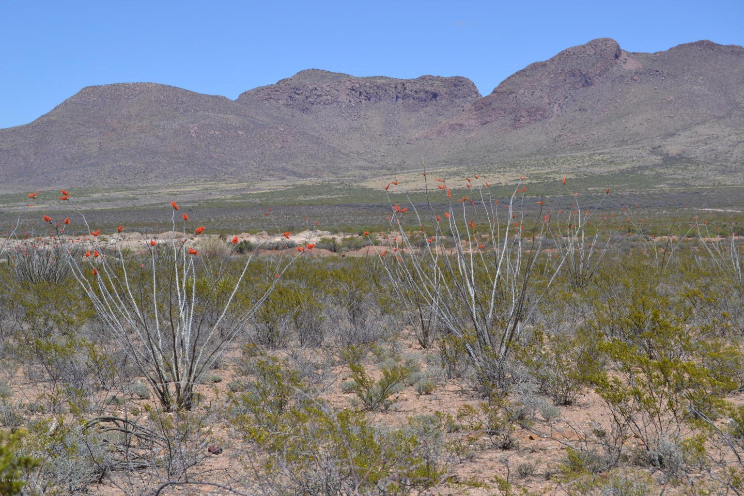 40 Acres for Sale Douglas AZ flowers, cliffs