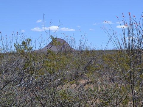 Land for Sale Douglas AZ flowers, cliffs
