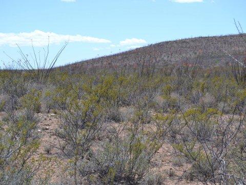 Vacant land Douglas AZ