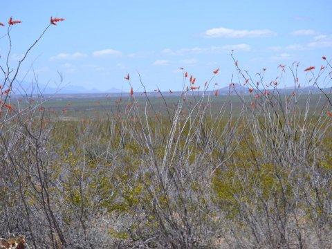 Vacant land for sale Arizona