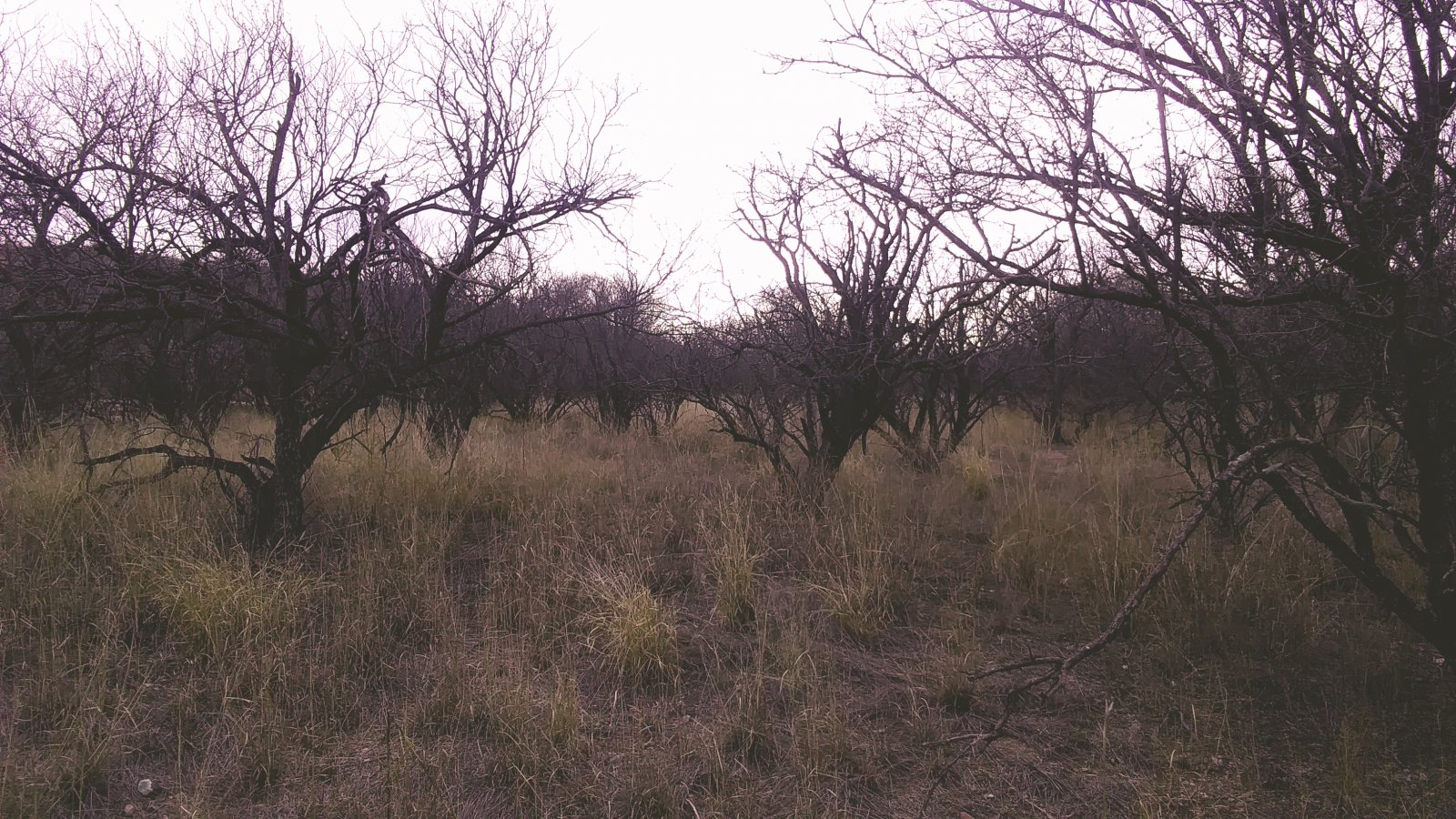 Standing at center of property facing WSW, showing mesquite trees