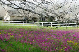 Floresville Tx -- Home for sale on Hwy 97 view from pasture w flowers