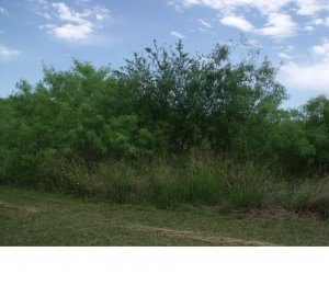 lot for sale in Floresville Tx