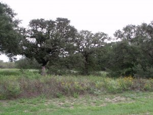Shannon Ridge land for sale - Floresville Tx