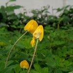 Peanut crop - floresville tx