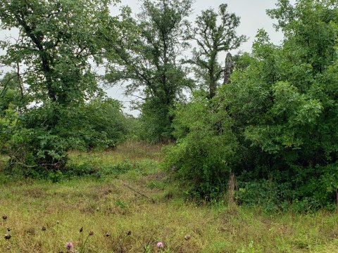 Land for sale, Stockdale Tx 78160