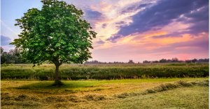 Effectively Marketing Land For Sale in Dallas