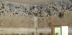 How To Sell A House With Mold in Omaha