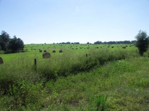 Tips For Selling Your Vacant Land In Omaha