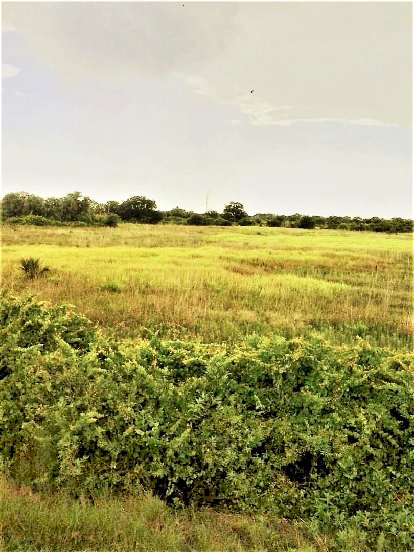 land for sale in Okeechobee Florida