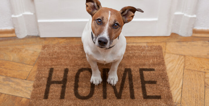 tucson home with pets
