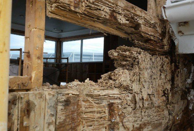 Sell a Termite Damaged Property in Utah?