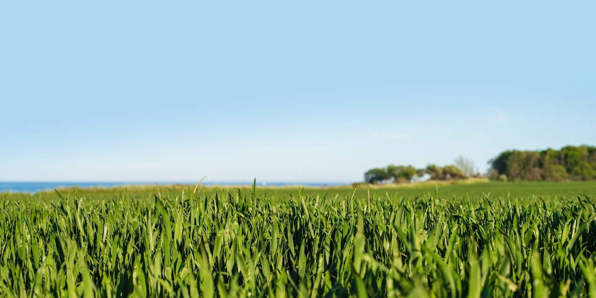 Popular Land Investments | crop field