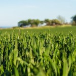 Popular Land Investments | crop field