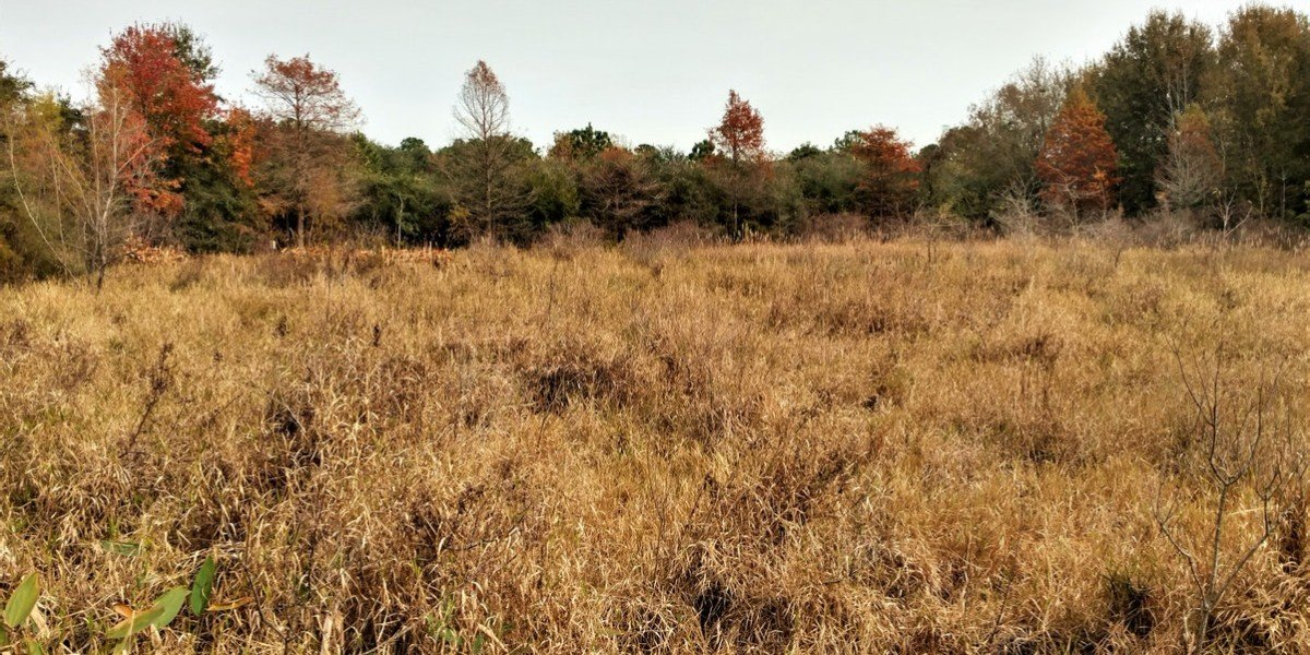bare land for sale in | bare land