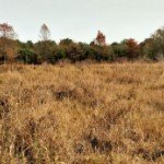 bare land for sale in   bare land