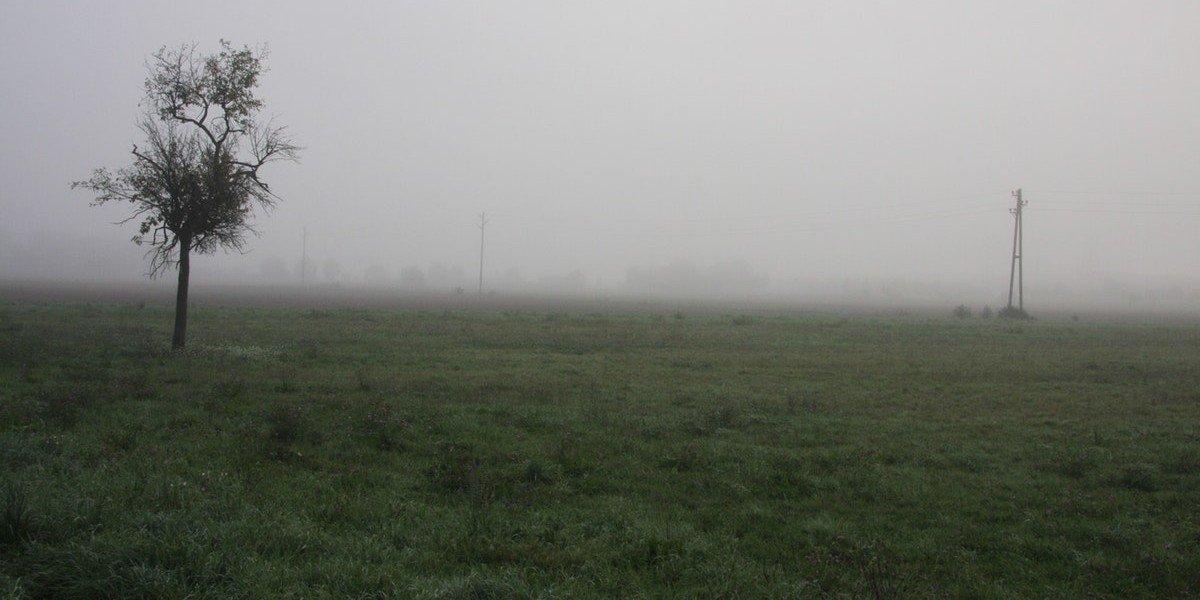 reasons we're buying bare land in | foggy field