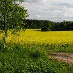is farmland a good investment in   farmland