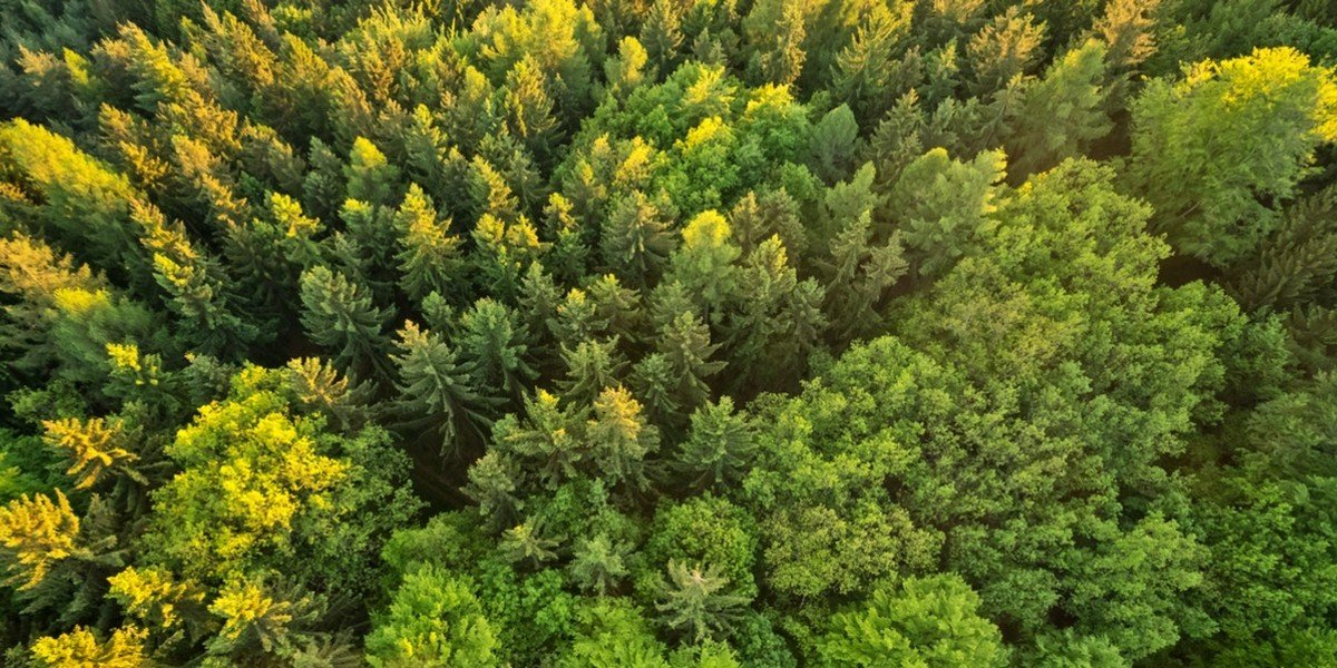 Tips for Buying Land   aerial forest
