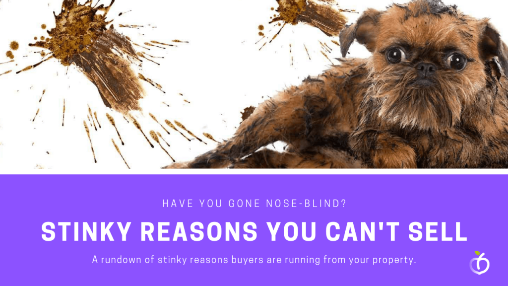 7 Stinky Reasons Your Home Isnt Selling in Atlanta GA Georgia