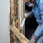 pest control rectifying termite damage