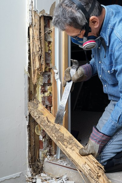 pest control fixing termite damage