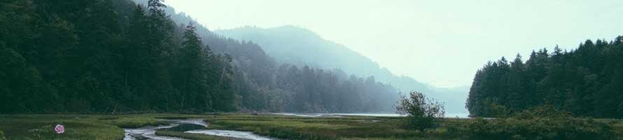 misty-woods