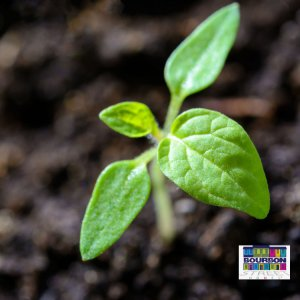 healthier plant for your eco friendly apartment in fort myers florida to use than furniture
